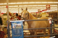 Ivory Pal inside Tractor Supply