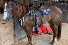 Kelsey-Jo-Lutjen-Treharne-horse