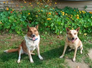 healthy dog supplements, Finding Our Way