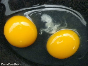 double yolked eggs
