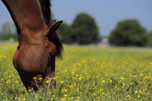 , Not all horses should graze
