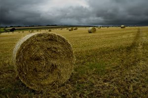 rained on hay, Determining the value of rained on hay