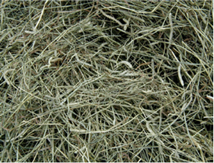 , Selecting and storing horse hay