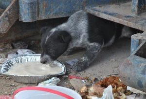 "dog shine, ""There's a Puppy at the Dump"" – LightShine Canine: A Rez Dog Rescue"