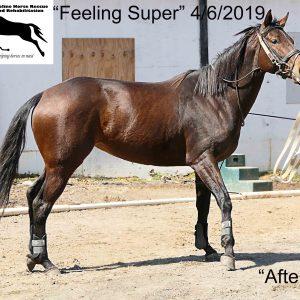 Omega Horseshine – Omega Fields