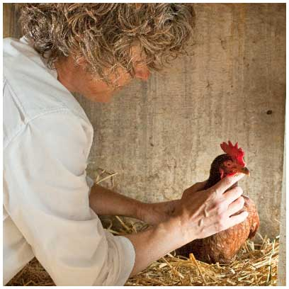vitamin mineral supplement for chickens, Will Work for Chicken Feed
