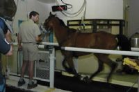 understanding horse nutrition, Understanding Horse Nutrition, Part 4: Exercise and Energy Needs