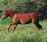 broodmares and foals, Understanding Horse Nutrition, Part 5: Broodmares and Babies, Oh My