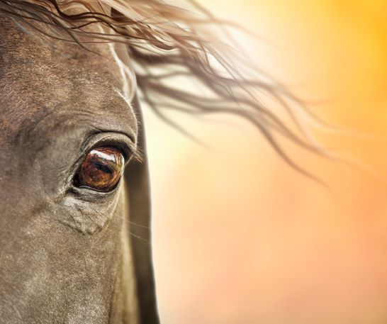 horse vision, Horse Myth Debunked…Horses Can't See Color