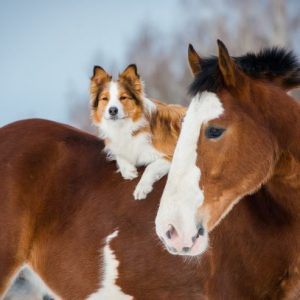Horse Myths Debunked Hot and Cold Blooded Horses