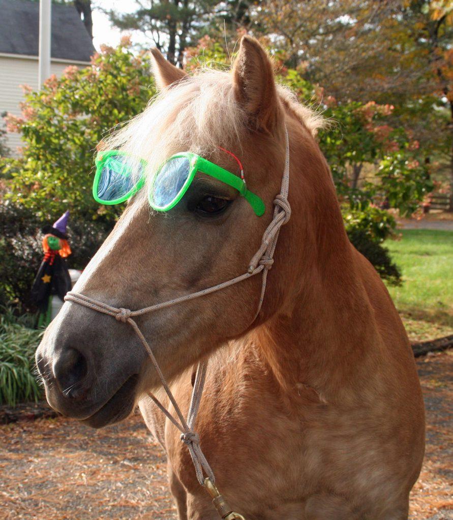 Team Velvet Precious Sunglasses