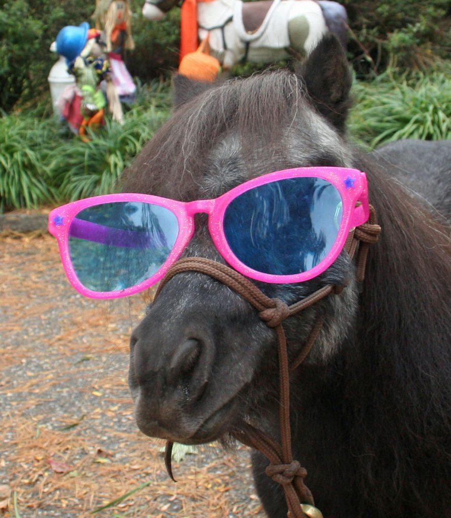 Team Velvet Sunglasses Annie