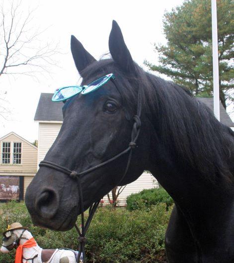 team velvet nonmounted horse therapy, 30 Day Omega Horseshine Challenge By Team Velvet, Inc.